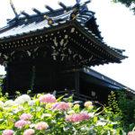 【東京十社めぐり】白山神社@東京都文京区