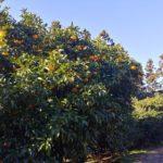 【オレンジ村オートキャンプ】オレンジ・リベンジのキャンプ泊